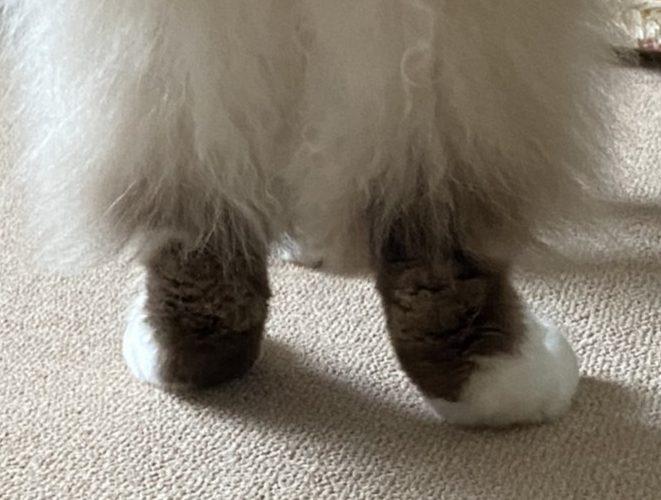 Diary of the Cat Named Oscar  気ままなオスカル日々の記録